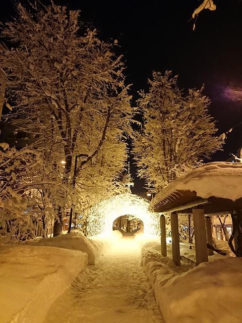 冬の7条緑道