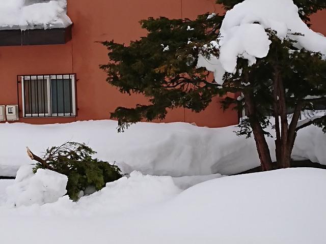 雪で枝が折れた